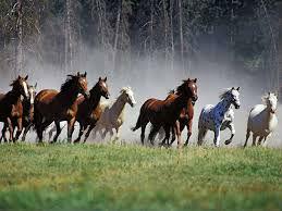 истинного любителя - прекрасный вид лошади, ее стремительный бег, ее чистое дыхание, ее бодрый запах - будут волновать и тревожить неизменно до глубокой старости, до самой смерти. И я даже полагаю, что и после нее.  Куприн.